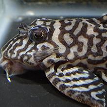 Aquaroom kichi